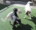 Charlie, Iggy and Agnes having fun!