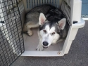 Kiska R. Finds a Quiet Place to Relax!