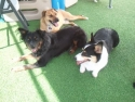 Sharing the Shade - Luna W., Lucy H. and Kai T.