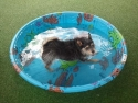 Roscoe W. Wants Somebody to Play in the Pool!