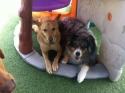 Longtime Daycare Buddies - Cody P. and Spartan S. (by Tori)